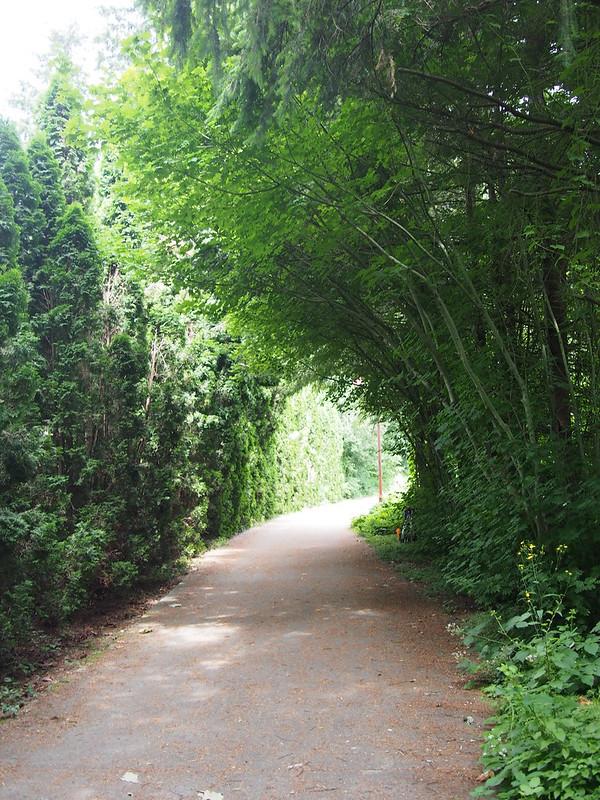 Rainier Trail