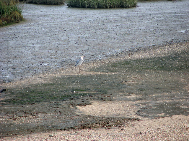 Heron at Yantlet Creek, Isle of Grain