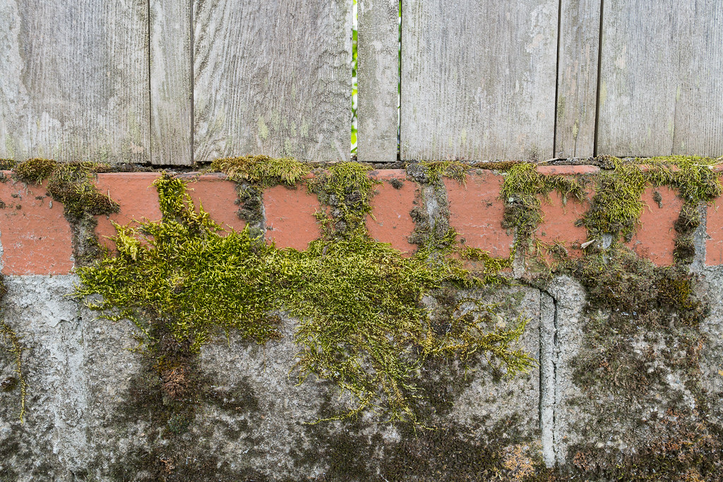 The base of fence shows layers of wood, brick, and concrete, all covered by moss