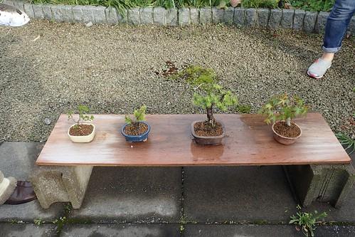 おじちゃんの盆栽棚