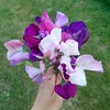 And now, of course, I have my first bouquet of sweet peas!