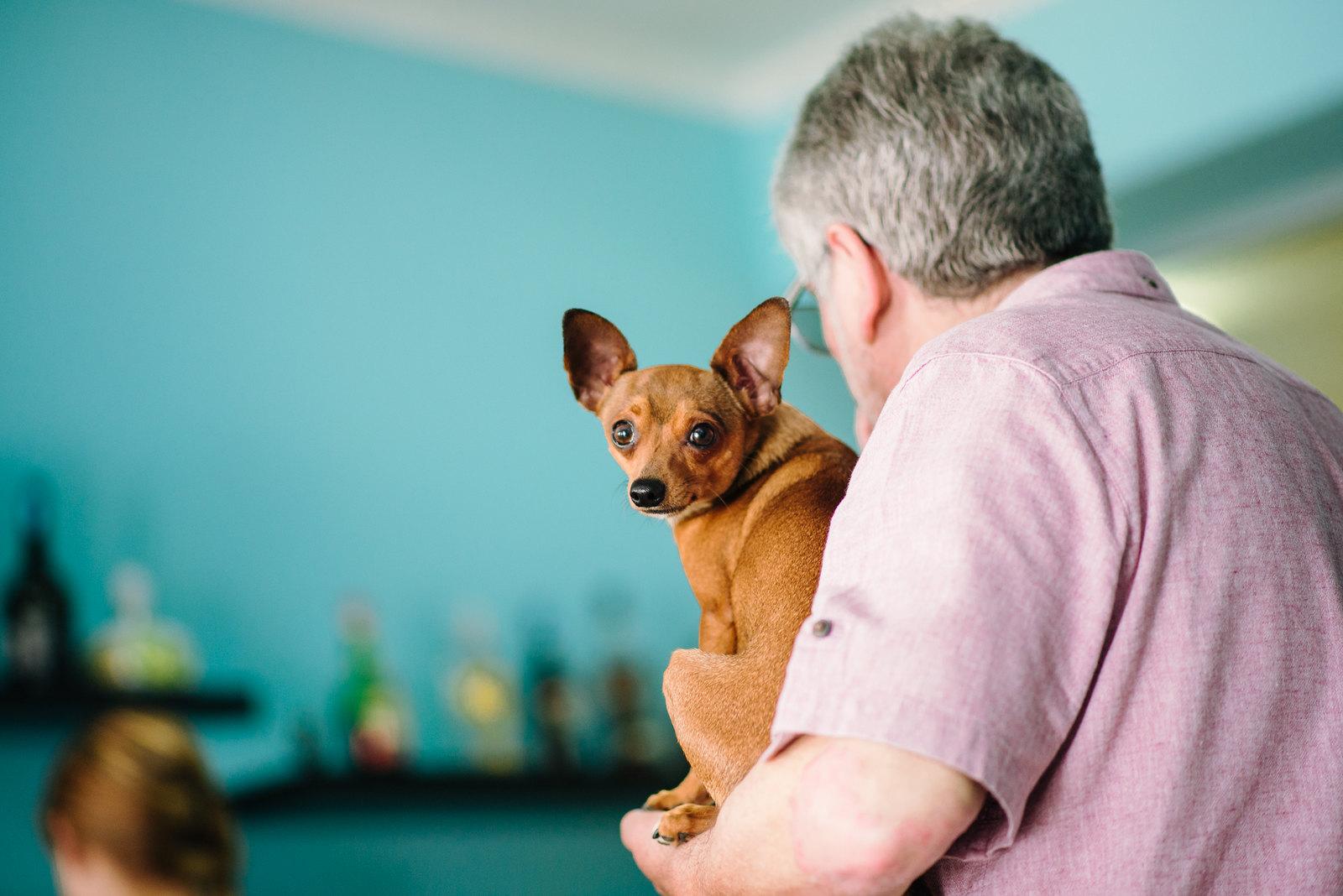 Kutya a portugál csehóban