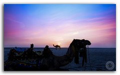The Ships of Desert in white salt fields adorned by multicolored sky of the Great Runn of Kutch!