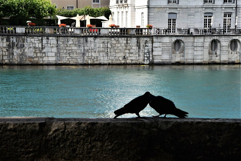 Pigeons 14.07 (5)