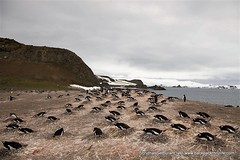 130-Antarctica-Landscapes-Penguin Colony