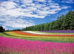 flower-garden-hokkaido-japan