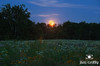 July Evening and Moonrise at Yeck Park