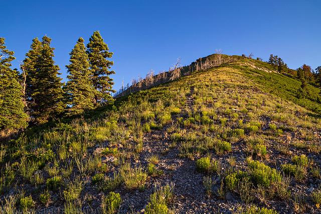 Faint Ridge Trail