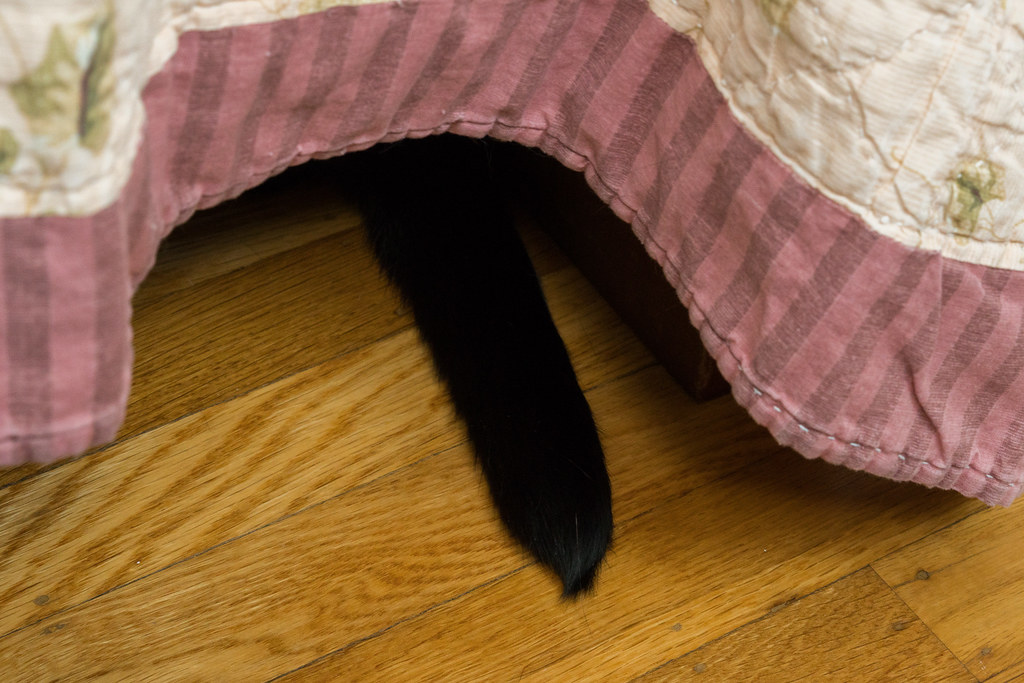 The tail of our cat Boo sticks out from under the bed