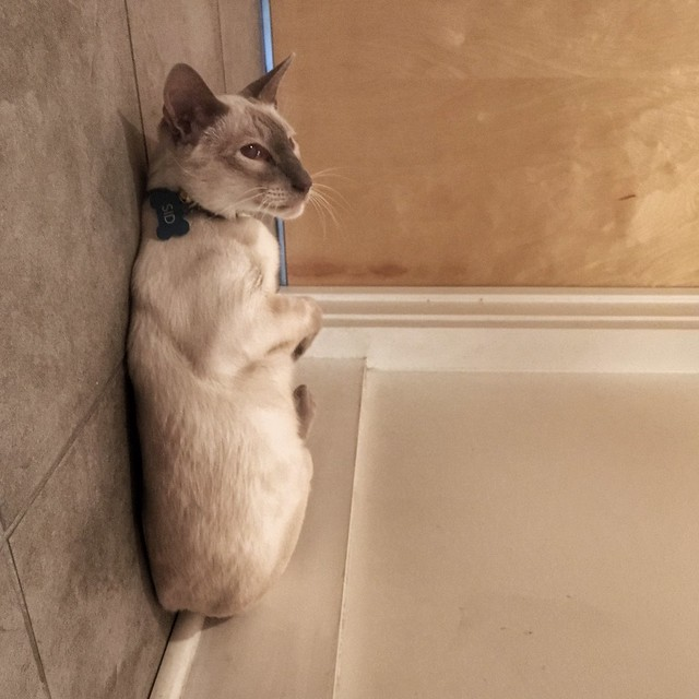 ivermectin dose for cats