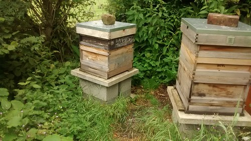 hives June 17 2