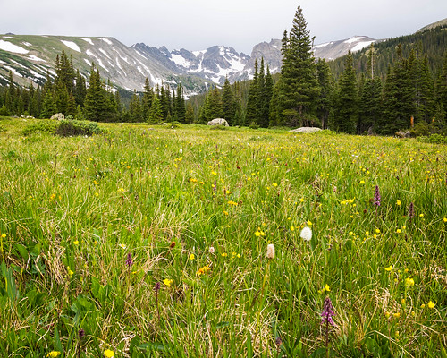 colorado summer mountains landscape wildflowers places outdoors ward unitedstates us