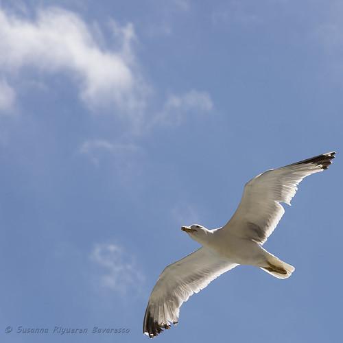In volo