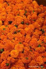 Orange marigold flower heads - Devaraja Market Mysore Karnataka India