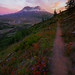 Trail Of Glory Into Sunset On Mt St Helens