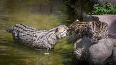 Fischkatzen...