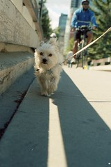 100 Dogs on film project #2