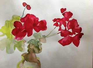 Geranium, watercolor on paper, 12x16