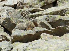 Marmotte - Photo of Villeneuve-d'Entraunes
