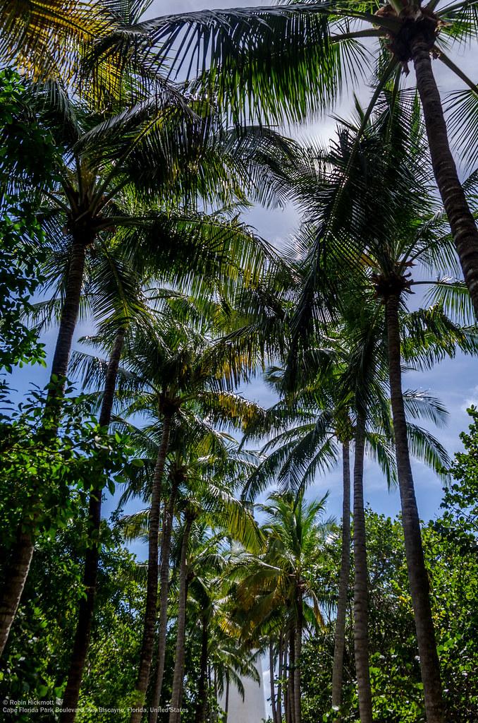Hotels Near Crandon Park Beach Miami