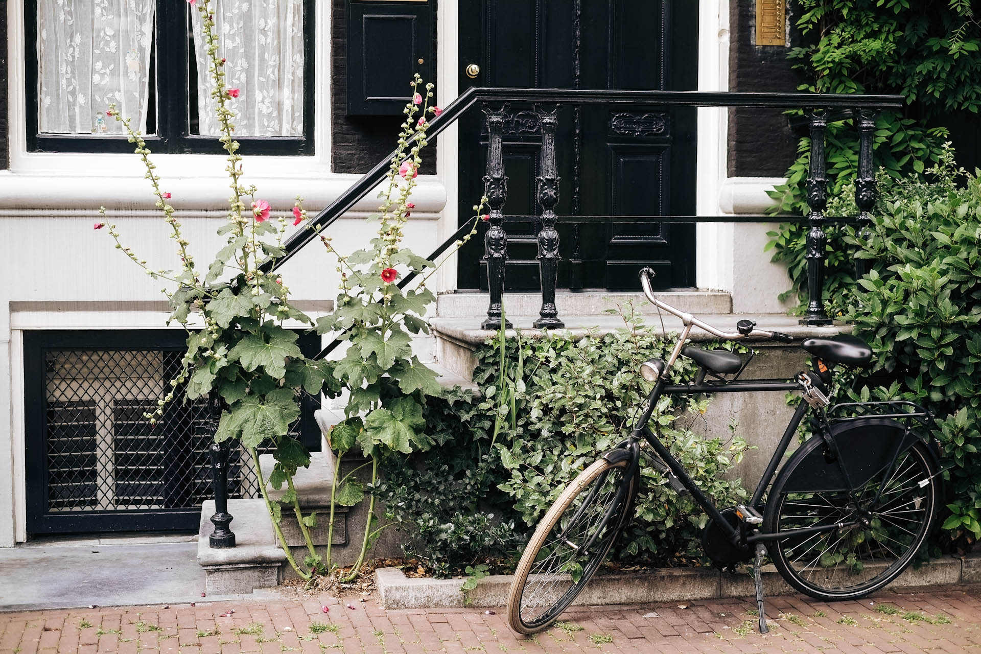 Amsterdam, In Bloom