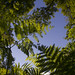 Summertime ferns by lucy★photography