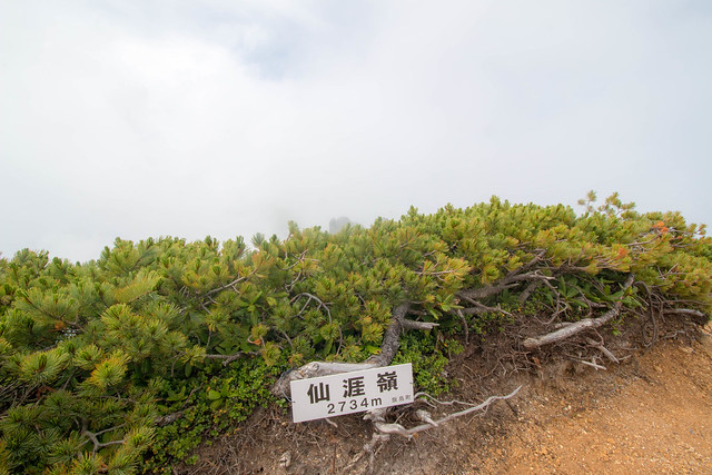20150808-空木岳-0284.jpg