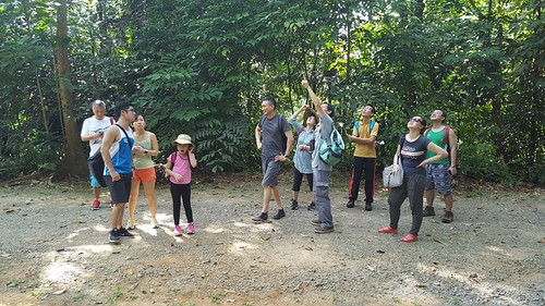 Discover Ubin walk by Strix Wildlife Consultancy at Pesta Ubin 2017