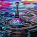 Drips Drops Splashes by Karen Tillett