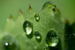 Rain drops ,
