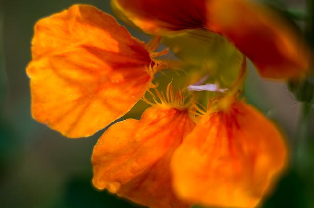 Voiles oranges, Pentax K-5, smc PENTAX-FA 50mm F1.4