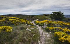 Haut-Languedoc landscape