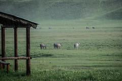 Kazakh Corner Route-5251