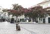 _IMG9537 Gatiño nunha praza de Setúbal