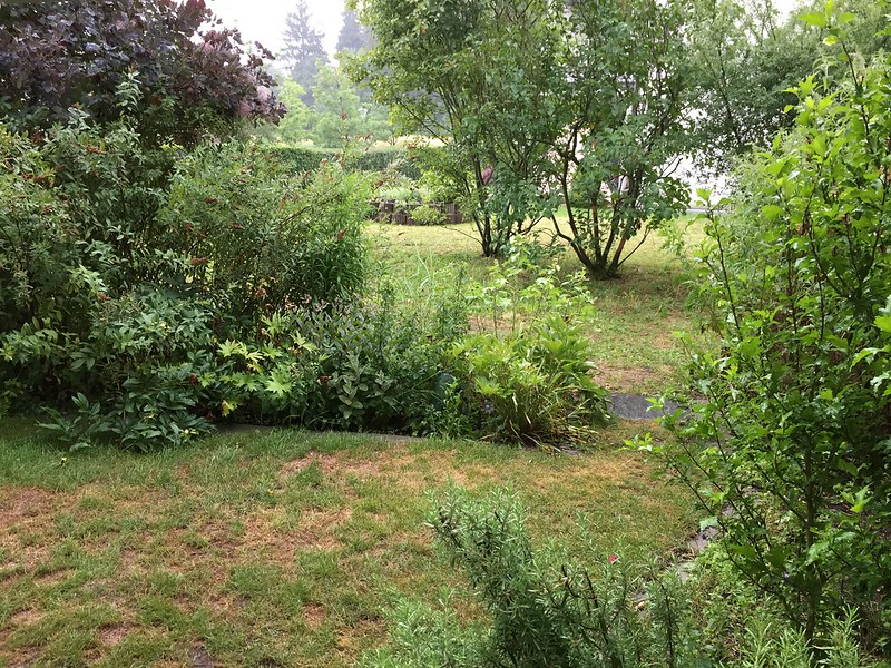 Back Garden in the rain
