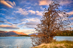Viejo y seco... nunca aburrido - Lago General Carrera (Patagonia Chile)