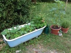 Jardin en pots 01