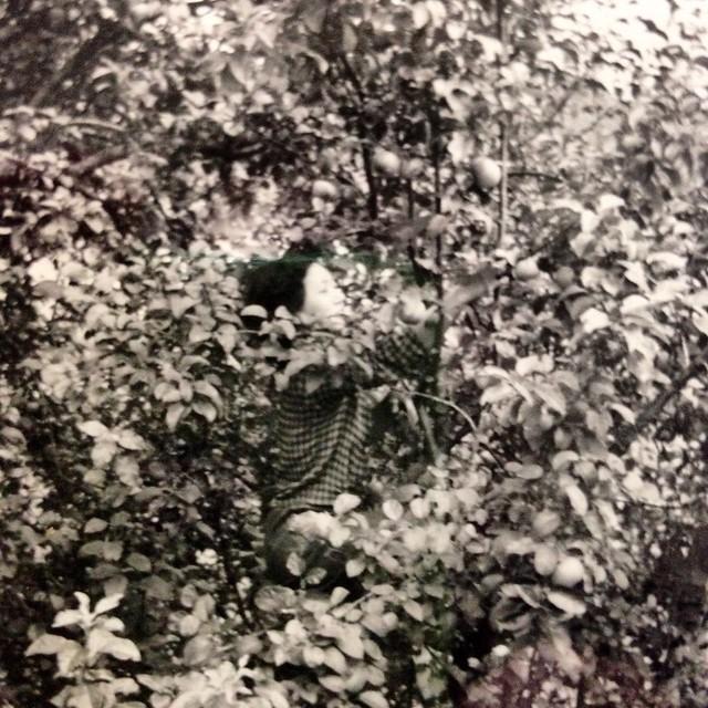 Ruth Asawa, picking apples, Black Mountain College, summer, 1946