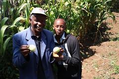 Farm in Kenya