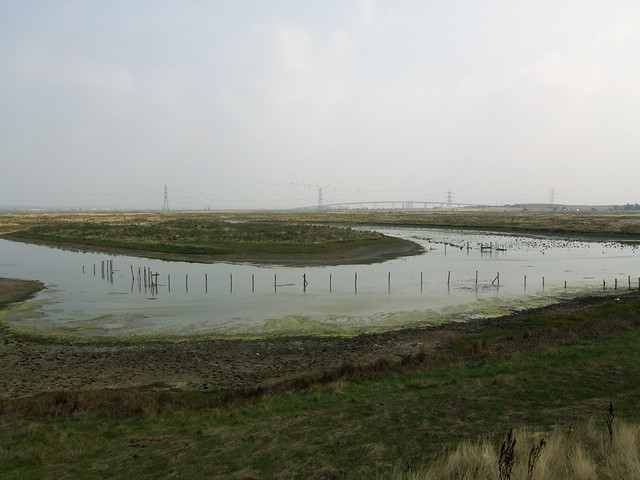 Marshes near Iwade