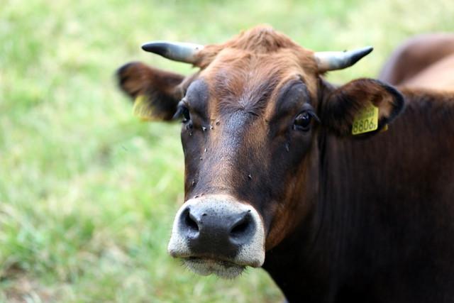 Coup de grace /koe de gras/
