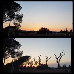 L'epilogo... Questa è una delle azioni del movimento cinque stelle a governo di Anguillara Sabazia da un anno.#sterminiodeipini #disboscamento  #tristezzainfinita #vialestorico #ambientalistidovesiete #ambientalisti #pini #pino #INalberiAMOci #iostoconPin
