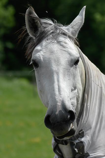Horse, Nikon D500, Sigma 150-600mm F5-6.3 DG OS HSM | S