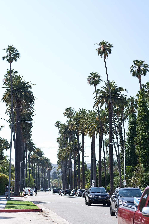 07travel-vacation-LA-palmtrees