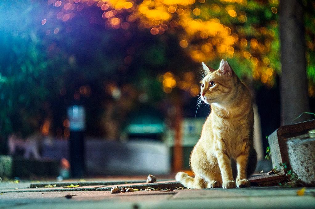街頭夜貓不寂寞