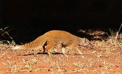South Africa - Mammals