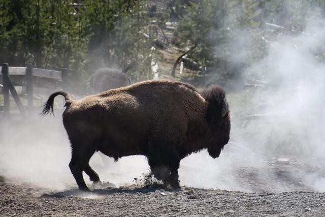 A Bison Parser Bison definitio...