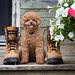 25/52 Pyper - challenge: shoes by Pyper Pup