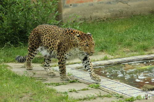 Besuch Zoo Hannover 24.06.201761