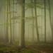Friston Forest - June 22nd by Edd Allen